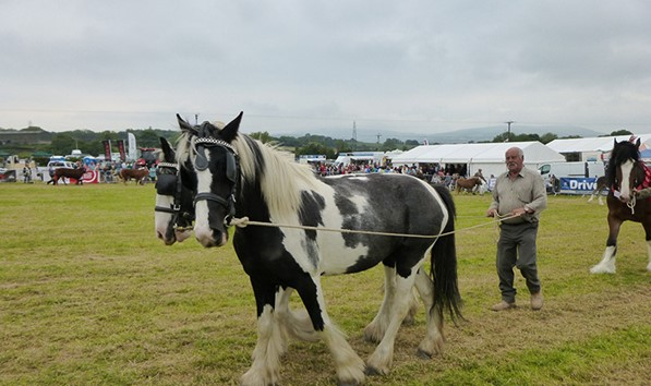 Caerwys Agricultural Show 2