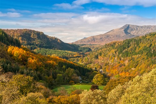 Betws y coed forest view