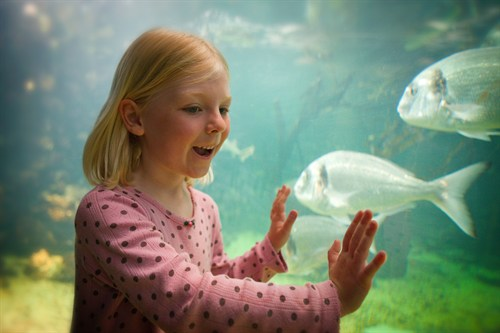 Anglesey Sea Zoo