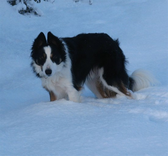 Bryn the dog in snow